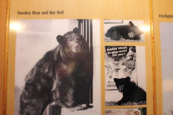 Smokey as a cub and grown bear