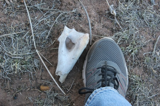 A big piece of bone near our fire ring