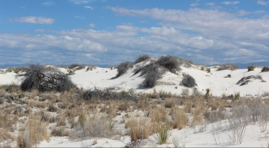 Looks just like ocean dunes