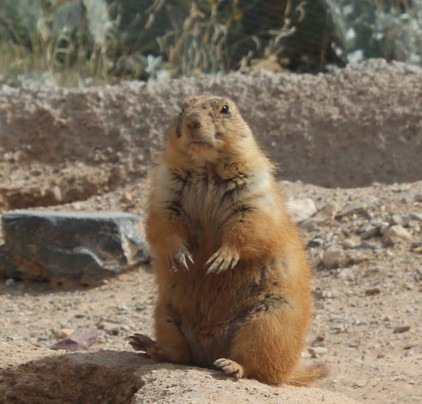 Our favorite though was the prairie dogs