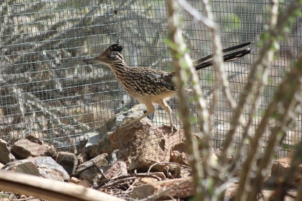 And a very cool road runner