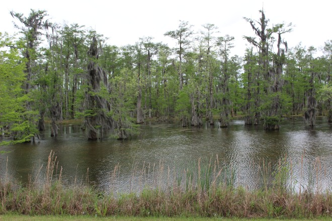 My very first view of Louisiana swamp was really pretty