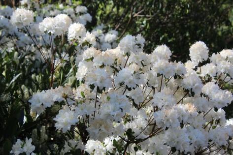 Beautiful flowers in bloom