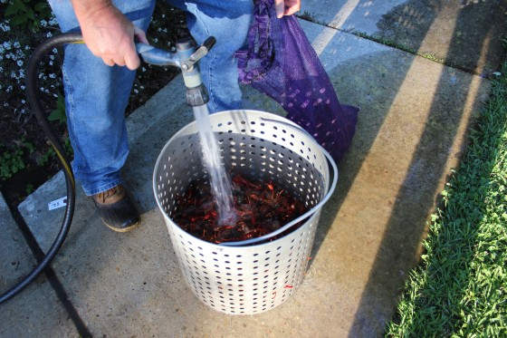 Pat cleaning the crawfish