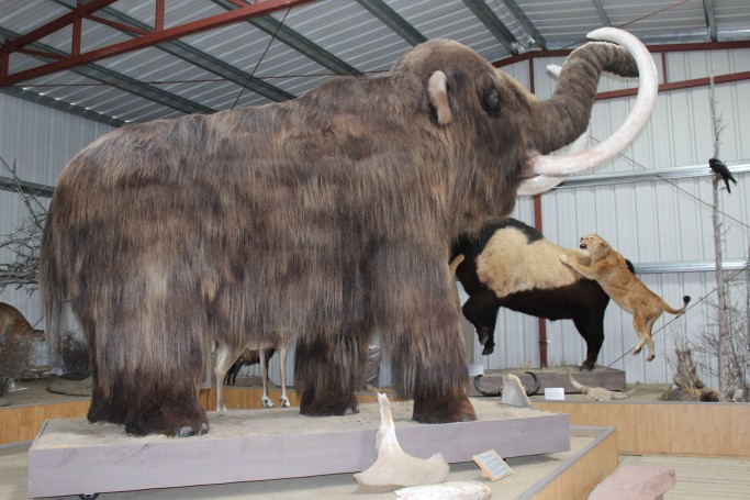 My two favorites were the Wooly Mammoth