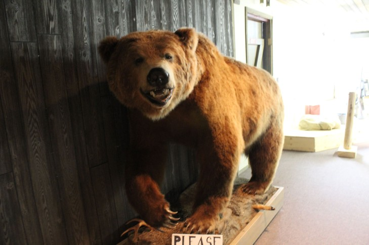 The Wildlife Museum started with a giant stuff grizzly