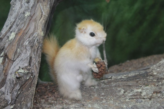 I liked the little animals as well which you rarely see. This is an Albino Red Squirrel
