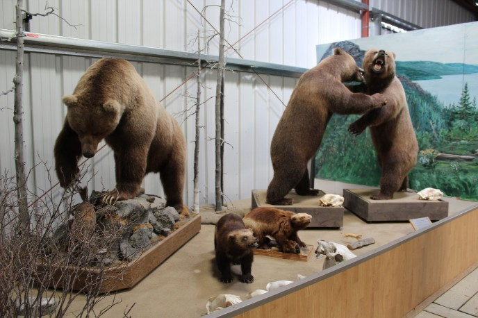 Bears and wolverines