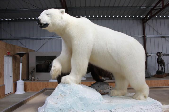Gigantic polar bear!