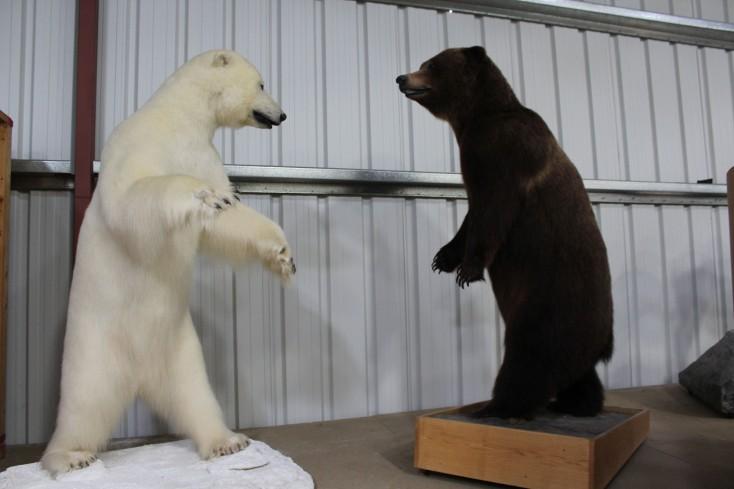 Polar bear vesrus Alaskan Brown Bear