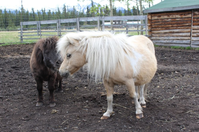 Ponies which Lee does NOT like. He had a very mean one when he was a kid