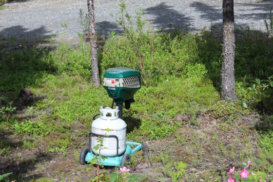 These propane mosquito eaters fill up with thousands of mosquitos in no time and one of Lee's jobs is to empty them. Battling mosquitoes is a full time job here!