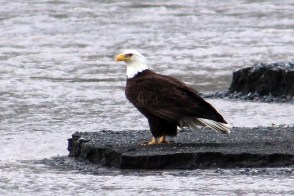 The eagle!