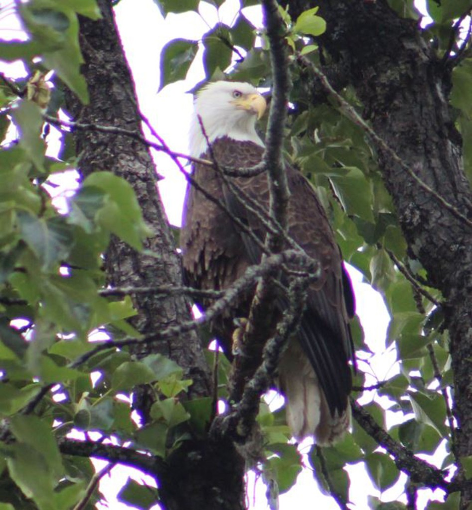The eagle stayed on watch and was not happy we were down below