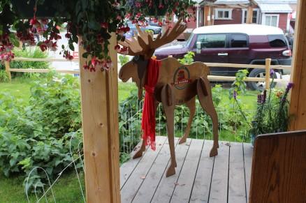 Lots of moose sightings :)