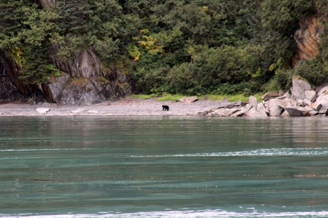 There was a black bear sighting which Lee snapped this picture of, but since I was on the wrong side of the boat I couldn't see it before it was gone