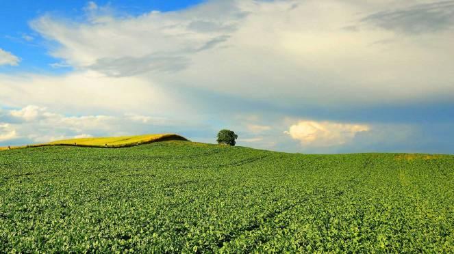 bg-sugar-beet-field