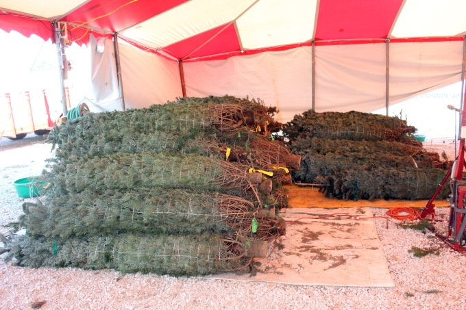 HEre's the batch of trees we received. Lifting some of these required two people