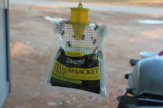 Rescue Yellow Jacket Traps