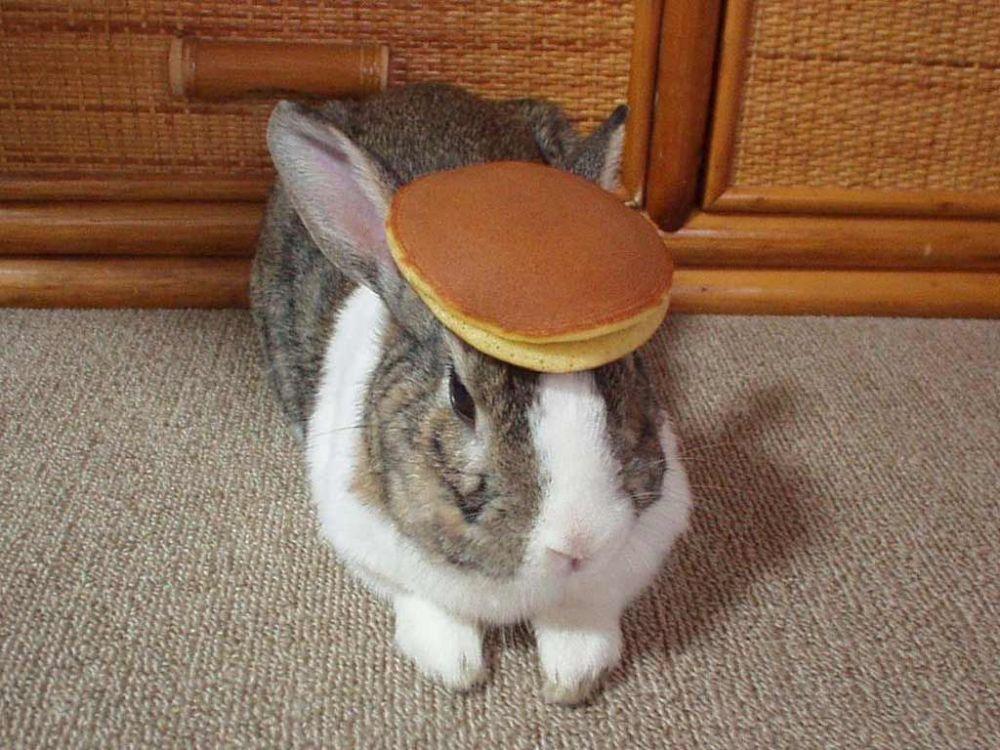 pancake_bunny